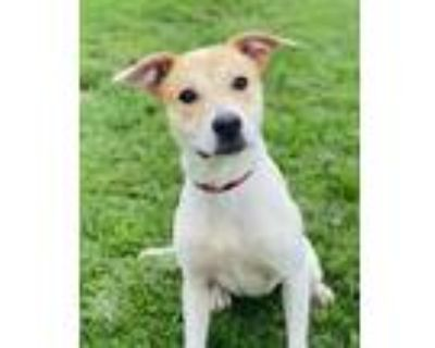 Adopt Rumor Roo a Mixed Breed