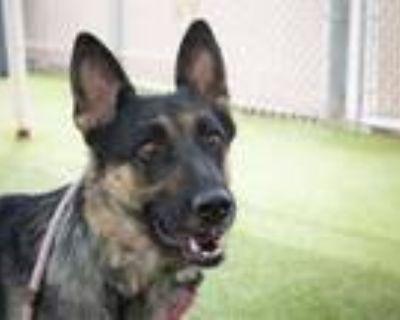 Adopt CASSIE a German Shepherd Dog