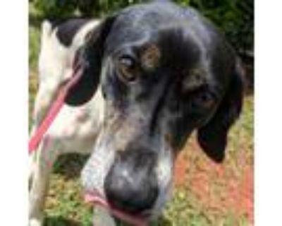 Adopt Gerbil a Beagle