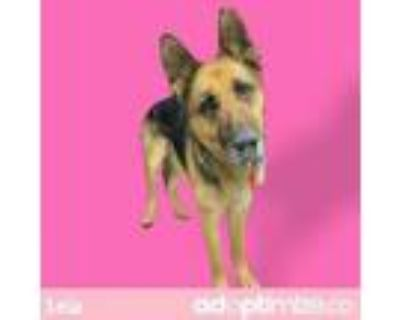 Adopt LEIA a German Shepherd Dog