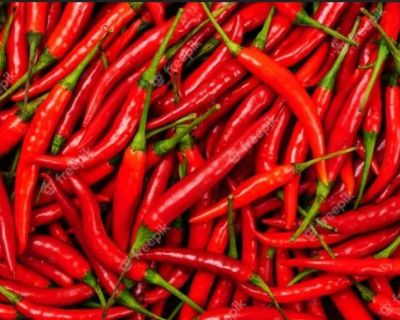 Cayenne pepper seeds lot of 50