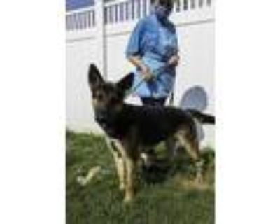 Adopt Pelagos a Black Mixed Breed (Large) / Mixed dog in Chamblee, GA (31834991)