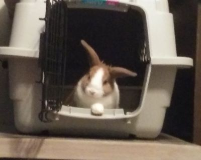 Bunny needs good home
