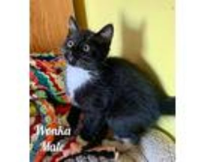 Kittens, Domestic Mediumhair For Adoption In Noblesville, Indiana