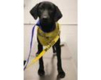 Adopt Blueberry a Black Mixed Breed (Large) / Mixed dog in Covington