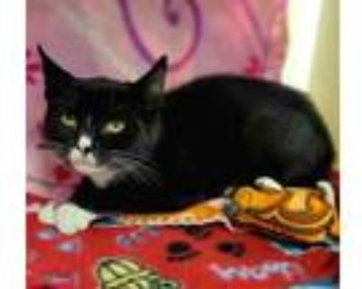 Adopt Mary 973-21 a All Black Domestic Shorthair / Domestic Shorthair / Mixed