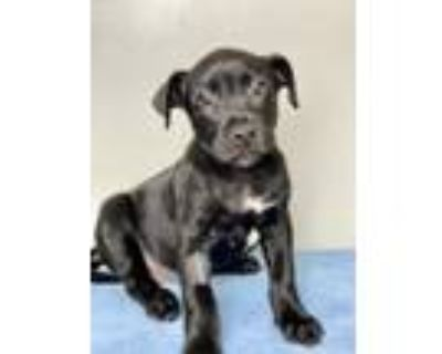 Adopt Rover a Black Mixed Breed (Large) / Mixed dog in Palm Springs