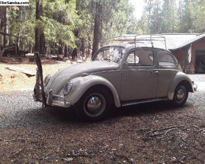 D. Stankalis 1964 Bug