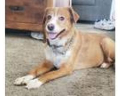 Adopt Belle a Mixed Breed