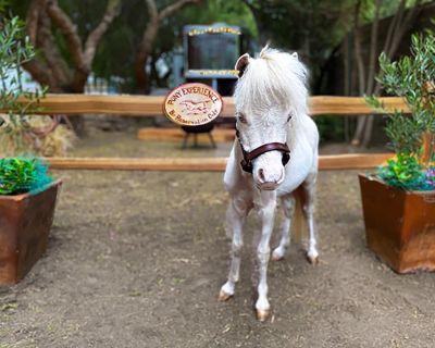 The Pony Experience Farm Stay! - Temecula