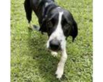 Adopt Bessie a Hound