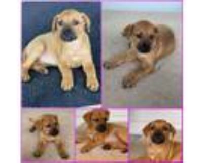 Adopt Sophie a Mixed Breed