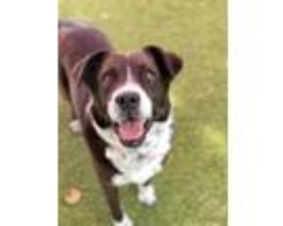 Adopt Toby a Border Collie