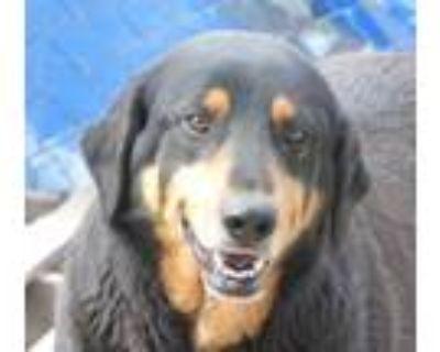 Adopt Ely a German Shepherd Dog