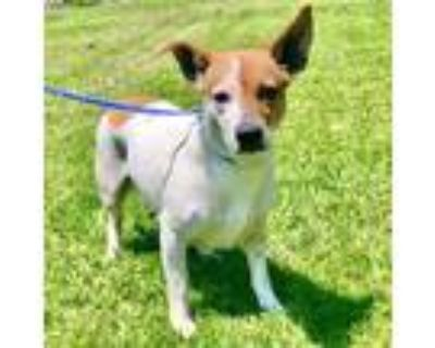 Yara, Terrier (unknown Type, Small) For Adoption In New Iberia, Louisiana