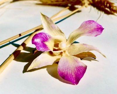 """3"""" Real Hawaiian Orchid Magnetic Pin"""