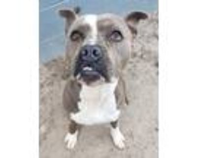 Adopt Titan a Mixed Breed (Large) / Mixed dog in Portsmouth, VA (30835696)