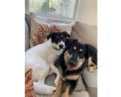 Adopt Gloria and Polly a Mixed Breed, German Shepherd Dog