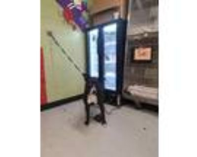 Adopt MICKEY a Black - with White American Pit Bull Terrier / Mixed dog in