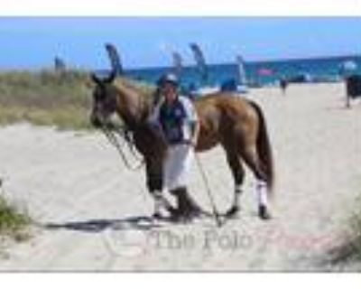 Beautiful Trail Low Level Dressage or Ranch Appendix Mare Good Home Only