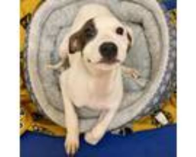 Adopt Willow a Mixed Breed