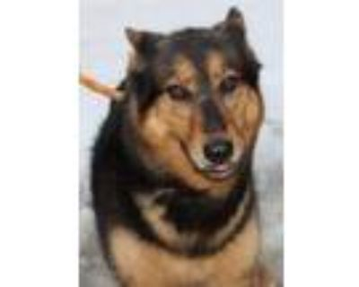 Adopt Zena a German Shepherd Dog