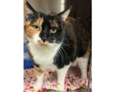 Adopt Momma Cat a Calico / Mixed (short coat) cat in Modesto, CA (31439110)