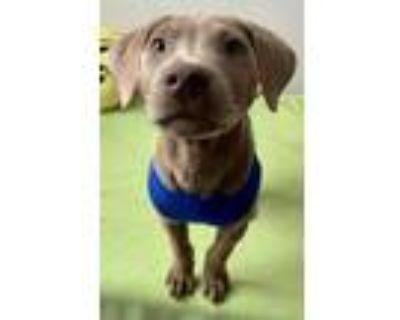 Adopt Rhino a Tan/Yellow/Fawn Mixed Breed (Medium) / Mixed dog in Binghamton
