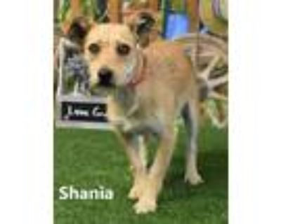 Adopt Shania a Tan/Yellow/Fawn Terrier (Unknown Type, Small) / Mixed dog in