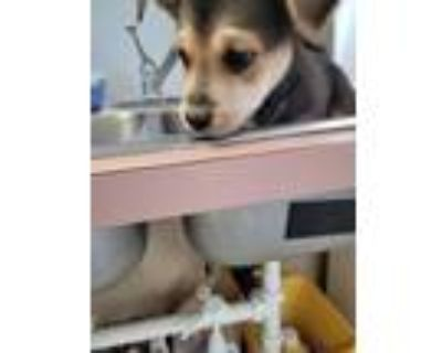 Adopt Ant a Mixed Breed