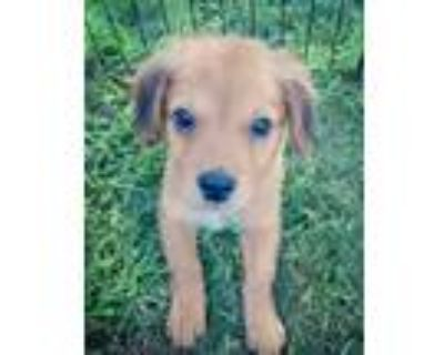 Adopt Scout a Mixed Breed