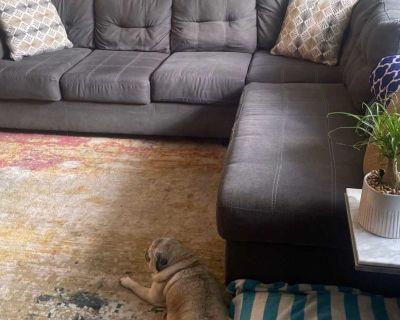Maier Charcoal Laf Sectional Sofa with Chaise