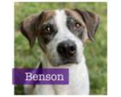 Adopt Benson a Hound, Pointer