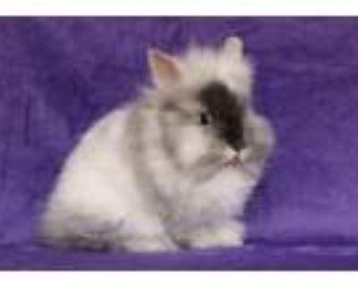 Adopt Pip a Bunny Rabbit