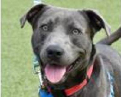 Adopt VISION a Labrador Retriever, Mixed Breed