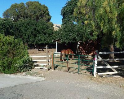 Private room with shared bathroom - Walnut Creek , CA 94598