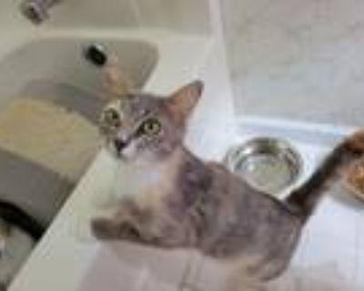 Adopt Squeak a Tortoiseshell Domestic Shorthair cat in Acworth, GA (31664086)