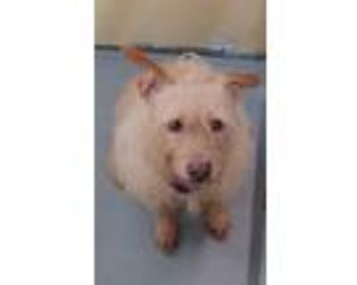 Adopt Buffy a Terrier (Unknown Type, Small) / Mixed Breed (Medium) / Mixed dog