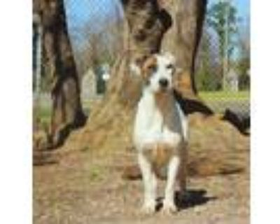 Adopt Cecily a Hound, Terrier