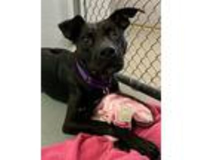Delilah, Terrier (unknown Type, Small) For Adoption In Fort Myers, Florida
