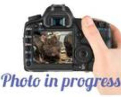 Adopt DWIGHT a Rat