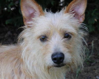 Rey P 11374 - Mixed Breed (Small) - Adult Male