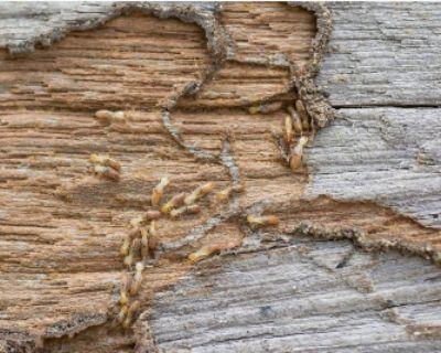 Termites oklahoma city