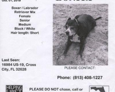 LOST DOG Bonita Boxer/Lab Mix