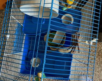 2 Story Hamster Cage with Extras
