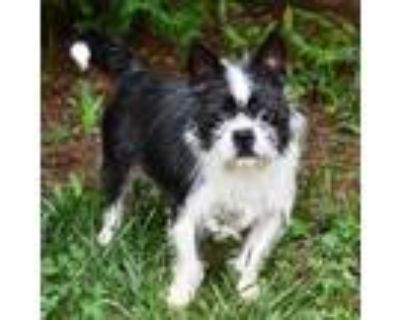Adopt Fendy 11070 a Black Mixed Breed (Small) / Mixed dog in Cumming