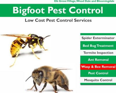 Wasp And Bee Removal Elmhurst