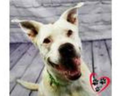 Adopt Ghost a Black Dalmatian / Mixed dog in Cheyenne, WY (31188585)