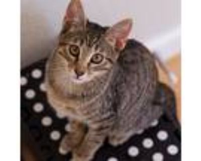 Ren, Domestic Shorthair For Adoption In Fort Lupton, Colorado