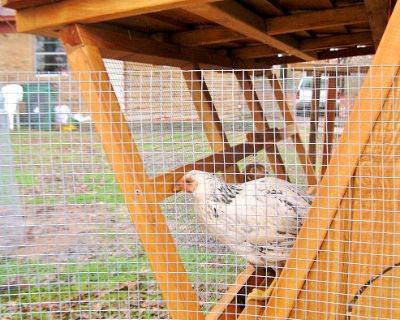 5 ft tall portable chicken coop in movable chicken yard WINTER SALE in Oklahoma city area